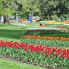 2013-5-Tulpen-Morges33